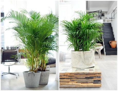 10 mejores plantas de interior paperblog for Mejores plantas para interior