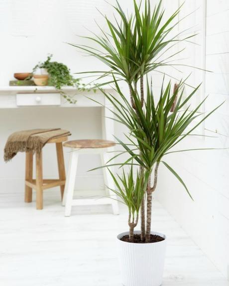 10 mejores plantas de interior paperblog - Las mejores plantas de interior ...
