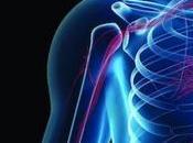 ¿Por vitamina fundamental para buena salud huesos corazón?