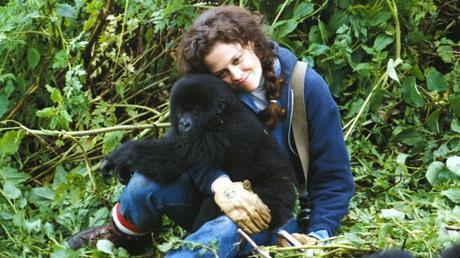 peliculas-mujeres-profesionales-gorilas-en-la-niebla