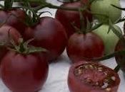 Tomates transgénicos para prevenir enfermedades