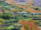 Otoñada Valle Jerte.