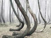 misterioso bosque Polonia.