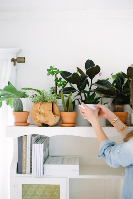 Plantas que llenar n tu hogar de feng shui paperblog for Plantas para el hogar feng shui
