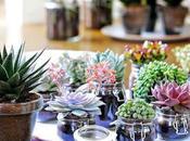 Plantas llenarán hogar Feng Shui