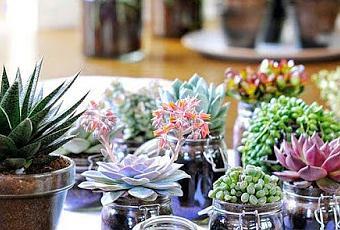 Plantas que llenar n tu hogar de feng shui paperblog for Flores para el hogar feng shui