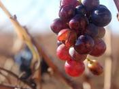 paseo Rioja (I): Logroño Bodega Ysios Laguardia