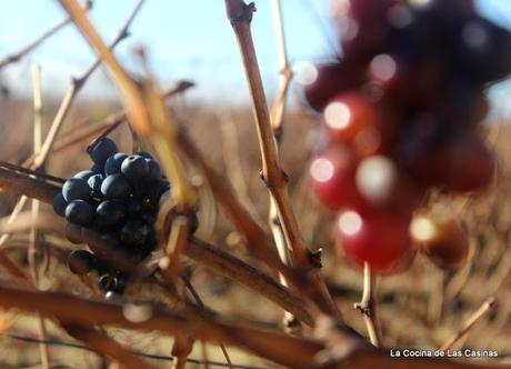 Un paseo por La Rioja (I): Logroño y Bodega Ysios en Laguardia