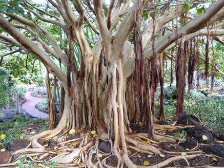 Jard n bot nico viera y clavijo islas canarias paperblog for Jardin botanico viera y clavijo
