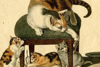 Los gatos realistas de gottfried mind paperblog for Gato de carpintero