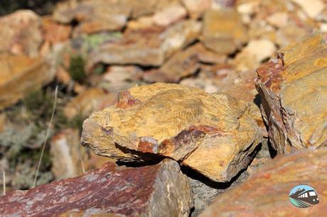 Alguno de los fósiles que nos encontramos