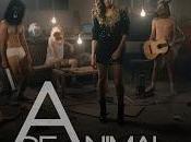 animal estrena videoclip