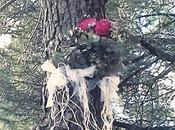 misterio pino flores
