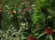 Decoración jardines verticales