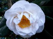 jardín Saleta otoño, noviembre 2015. Saleta's Garden autumn, November 1-30,