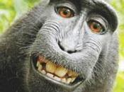 estudio mono gana bolsa, índice