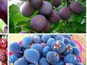¿Qué tienen especial frutas vegetales azules púrpura?