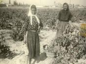 Historia Arcicollar: Población economía