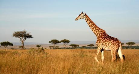 Safaris en Kenia sin mosquitos