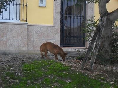 Manu y negrito en la calle el cuervo sevilla urgente - El tiempo el cuervo de sevilla ...