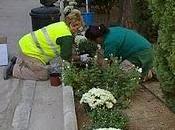crisantemo: ¿planta vida muerte?