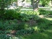 Jardines sombra