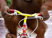 salud planeta utiliza bicicleta voto