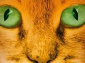 gatos guerreros nueva profecía Aurora ERIN HUNTER