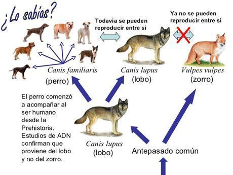 Nutrición en Perros