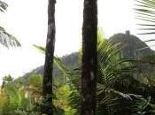 Yunque: Parque lluvioso tropical