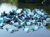 lago palomas.