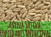 Usos medicinales Avena (Avena sativa).