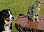 Adopción: ¿Perro gato?