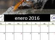 Calendario AeE-GEV. Enero 2016