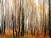Autumn Otoño