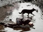 Andrei Tarkovsky Internet Gratis