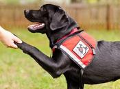 Perros Servicio. Asistencia para todos