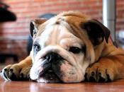 mejores razas perros para apartamento