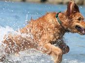 Verdades nutrición perro (32): dosis hace veneno