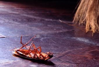 C mo eliminar una plaga de cucarachas de mi casa paperblog - Como eliminar los mosquitos de mi casa ...