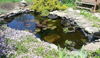 Como hacer un estanque huerto y jard n paperblog for Como armar un estanque