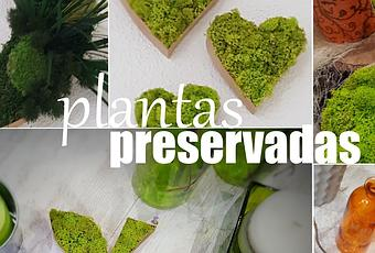 Plantas Y Flores Preservadas Paperblog