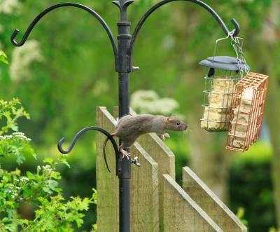 C mo eliminar una plaga de roedores de mi casa paperblog - Como eliminar ratas en casa ...