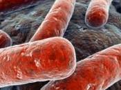 Adquisición hierro parte Legionella, factor clave para virulencia