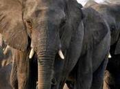 Convivir juntos elefantes, abejas humanos live together elephants, bees human.