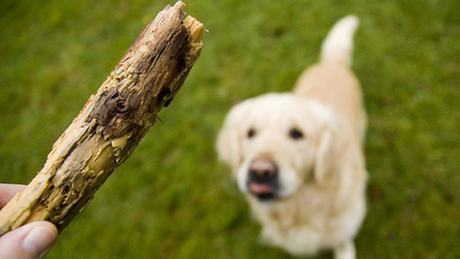 lanzarle palos al perro