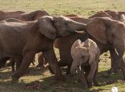 Parques naturales Sudáfrica