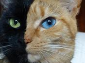 Gatos Pelaje característico