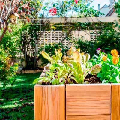 C mo hacer un huerto urbano en casa paperblog - Como hacer un huerto urbano ...
