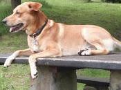 formas entorno puede ayudar perro